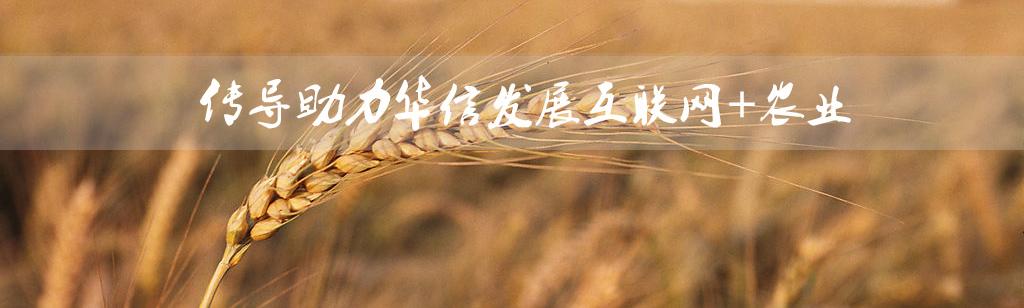 传导网络-华信农业-凯发国际网址建设