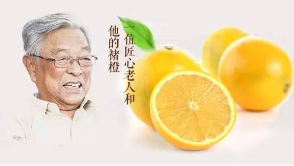南宁网络推广公司,南宁网络公司,褚橙